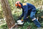 Allawah Tree cutting services 21